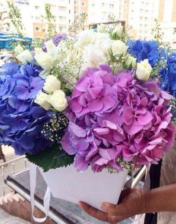 Bouquet of hydrangea | Delivery and order flowers in Kostanay