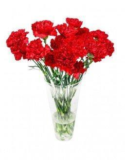 Bouquet of 15 red dianthus | Delivery and order flowers in Kostanay