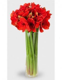 Bouquet of 15 red amariliss | Delivery and order flowers in Kostanay
