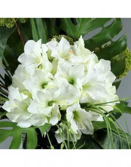 Bouquet of 25 white amariliss | Delivery and order flowers in Kostanay