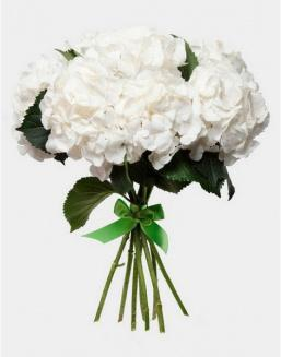 Bouquet of 25 white hydrangeas | Roses,hydrangeas to mother flowers