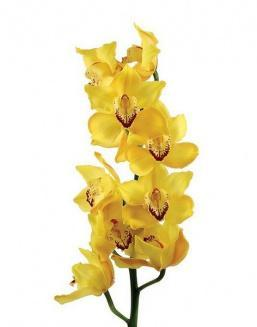 Bouquet of an orchid yellow | Delivery and order flowers in Kostanay