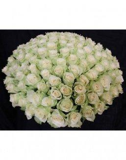 Bouquet of 101 white holland roses | Roses to mother,to fiancee flowers