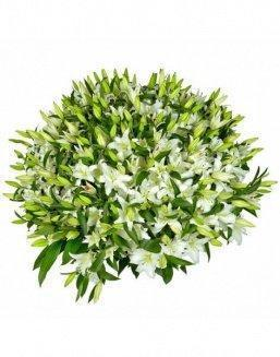Bouquet of51 white lilies | Delivery and order flowers in Kostanay